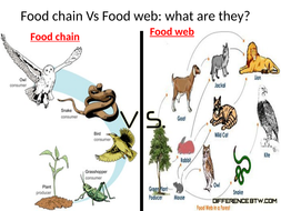 The Difference Between fod Web and Food Chain   OER Commons