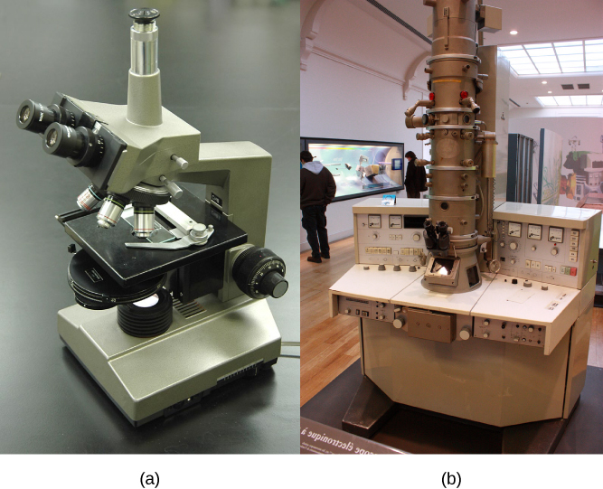 Part a: This light microscope has binocular lenses and four objective lenses. The sample stage is directly beneath the objective lens. The light microscope sits on a tabletop and can be easily carried. Part b: The electron microscope shown here sits in a museum. It is about the size of a desk, and a person can sit in front of it to operate it. A column taller than a person rises from the center of the scope.