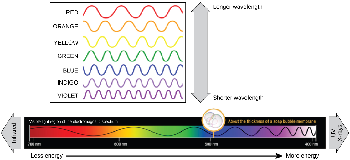 The illustration shows the colors of visible light. In order of decreasing wavelength, these are red, orange, yellow, green, blue, indigo, and violet.