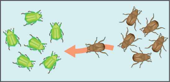 This illustration shows an individual from a population of brown insects traveling toward a population of green insects.