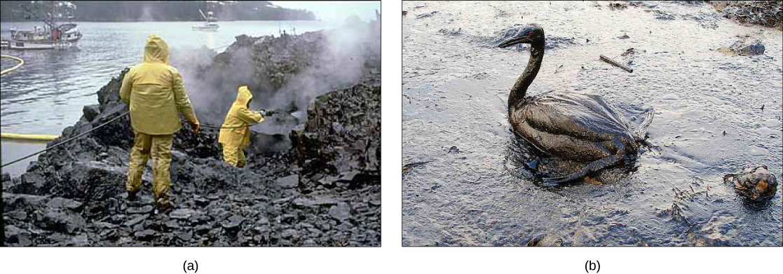 Part a: This photo shows two men in yellow raingear hosing off oil-drenched rocks on a sea-shore. Part b: This photo shows an oil-drenched bird sitting in oily water.
