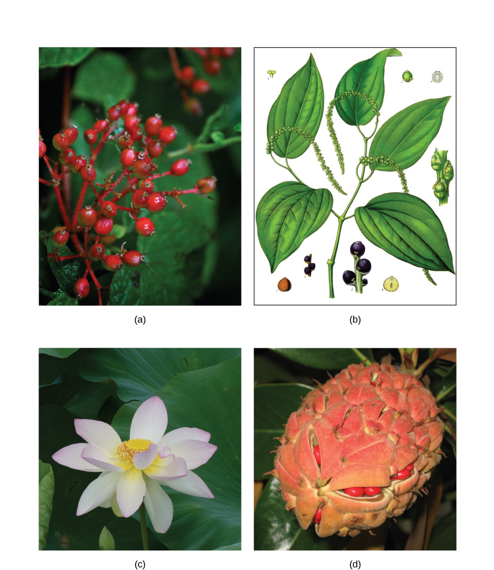 Flowers To Grow In Small Pots: Biology, Biological Diversity, Seed Plants, Angiosperms
