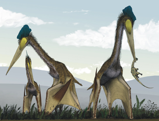 The illustration shows pterosaurs, which resemble large modern birds with long necks, long beaks, and bat-like wings.