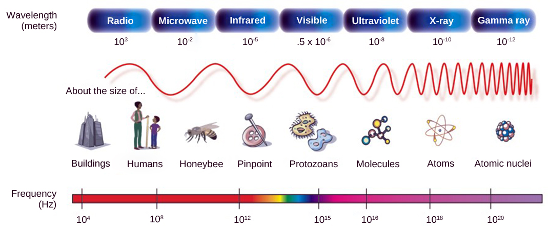 The illustration shows the electromagnetic spectrum, which consists of different wavelengths of electromagnetic radiation. Radio waves have the longest wavelength, about 103 meters. Wavelength gets increasingly shorter for microwave, infrared, visible, ultraviolet, x-rays and gamma rays. Gamma rays have a wavelength of about 10-12 meters. Frequency is inversely proportional to wavelength.