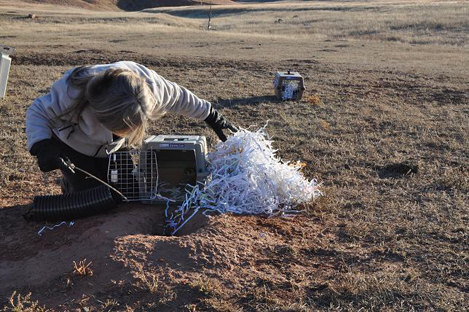 This photo shows a woman looking into a small cage with its door open. The cage sits on short prairie grass, next to a hole with dirt around the rim. In the background sits a second, closed cage.