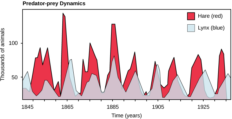 The graph plots number of animals in thousands versus time in years. The number of hares fluctuates between 10,000 at the low points, and 75,000 to 150,000 at the high points. There are typically fewer lynxes than hares, but the trend in number of lynxes follows the number of hares.