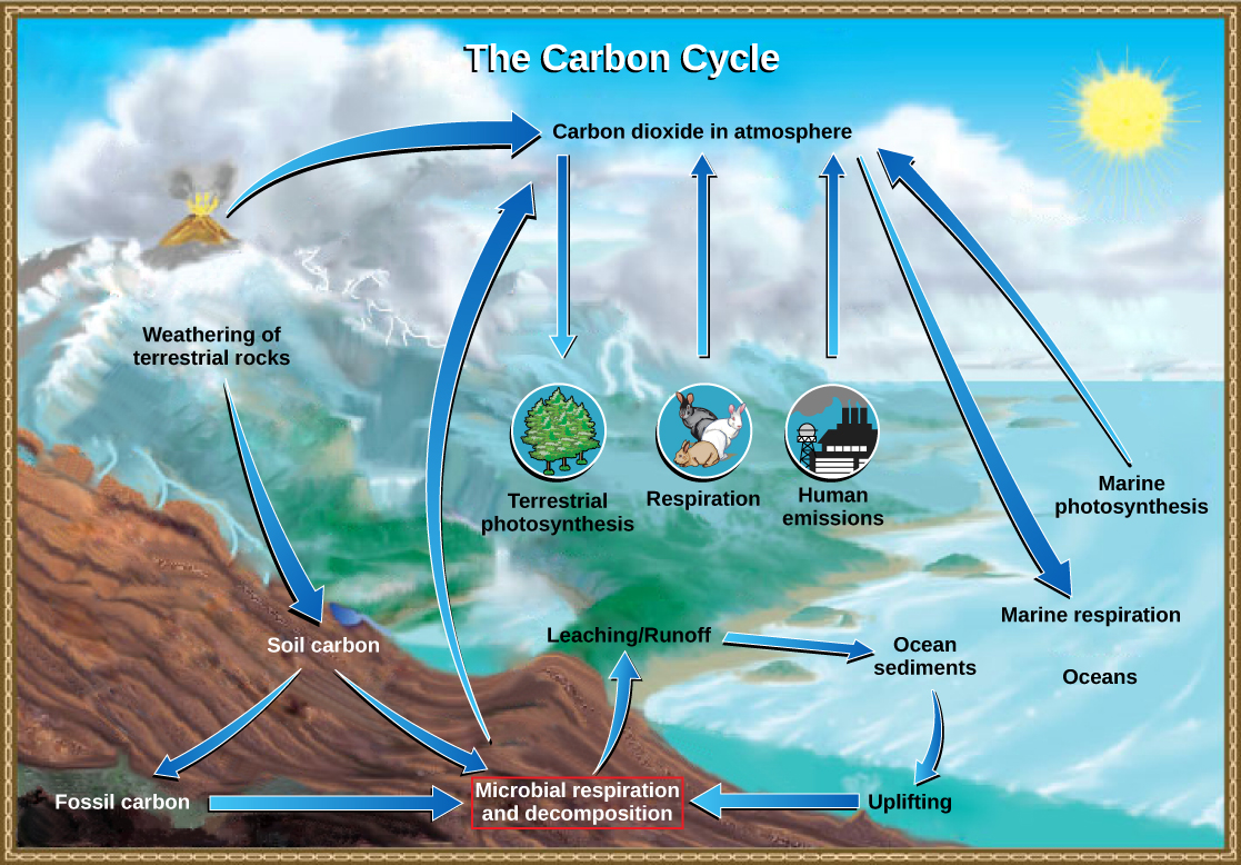 The illustration shows the carbon cycle. Carbon enters the atmosphere as carbon dioxide gas that is released from human emissions, respiration and decomposition, and volcanic emissions. Carbon dioxide is removed from the atmosphere by marine and terrestrial photosynthesis. Carbon from the weathering of rocks becomes soil carbon, which over time can become fossil carbon. Carbon enters the ocean from land via leaching and runoff. Uplifting of ocean sediments can return carbon to land.