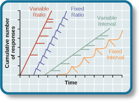 "A graph has an x-axis labeled ""Time"" and a y-axis labeled ""Cumulative number of responses."" Two lines labeled ""Variable Ratio"" and ""Fixed Ratio"" have similar, steep slopes. The variable ratio line remains straight and is marked in random points where reinforcement occurs. The fixed ratio line has consistently spaced marks indicating where reinforcement has occurred, but after each reinforcement, there is a small drop in the line before it resumes its overall slope. Two lines labeled ""Variable Interval"" and ""Fixed Interval"" have similar slopes at roughly a 45-degree angle. The variable interval line remains straight and is marked in random points where reinforcement occurs. The fixed interval line has consistently spaced marks indicating where reinforcement has occurred, but after each reinforcement, there is a drop in the line."