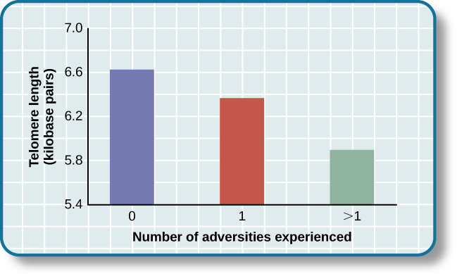 A bar graph shows the relationship between telomere length in kilobase pairs and the number of adversities people experienced. Those who experienced zero adversities had about 6.6 kilobase pairs for telomere size. Those who experienced one adversity had about 6.4 kilobase pairs for telomere size. Those who experienced more than one adversity had about 5.9 kilobase pairs for telomere size.