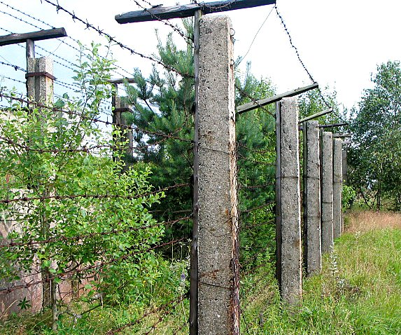 Strands of barbed wire are strung across two rows of concrete pillars to create a fence that crosses a shrubby field.
