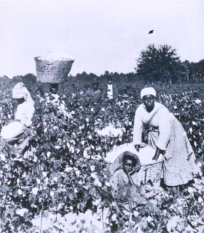 """Picking Cotton,"" Author unknown [Public domain], via Digital Collections, The New York Public Library"