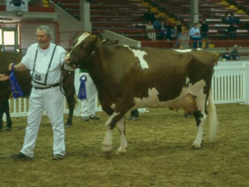 Syracuse, New York Spring Dairy Show