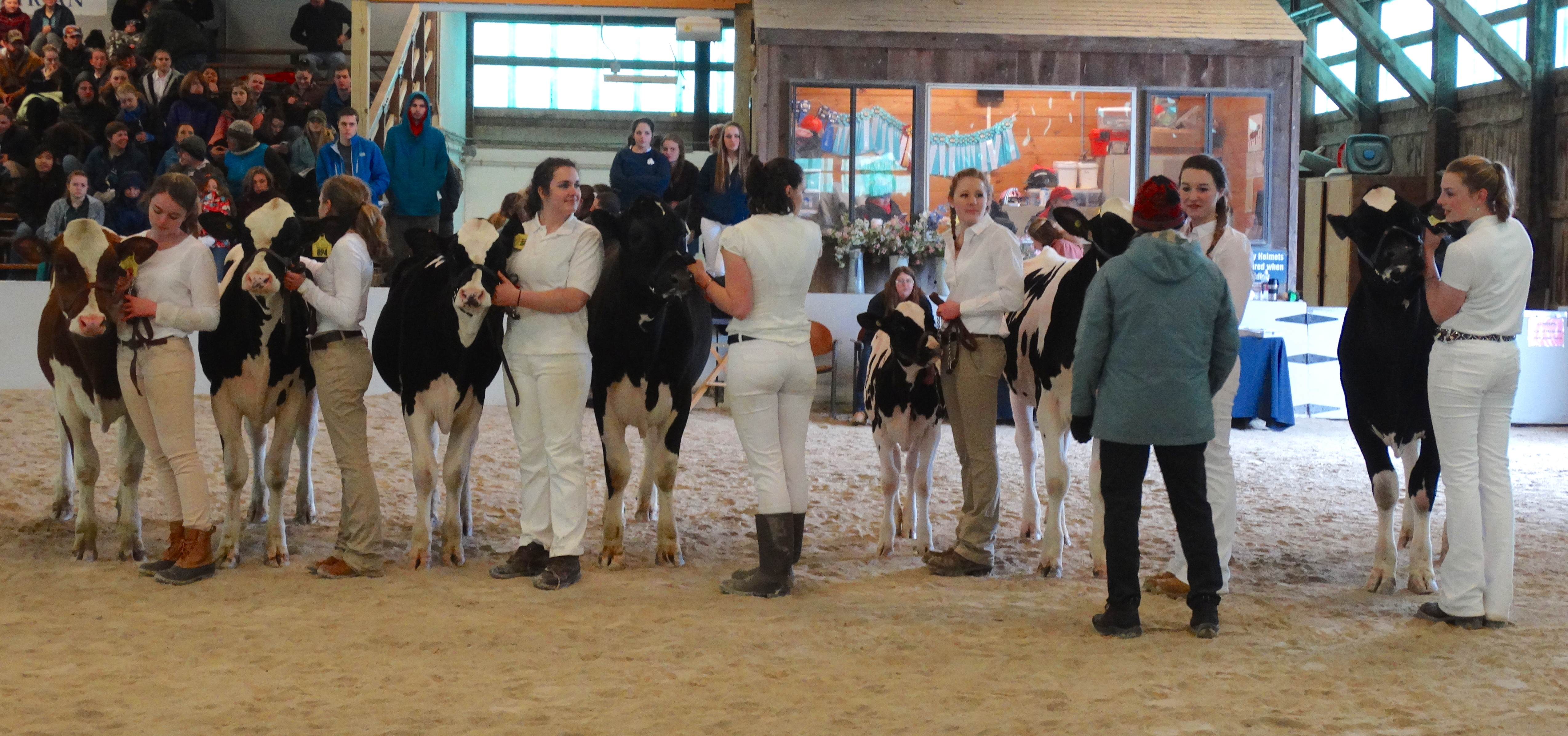 Judging Dairy Cattle can be done for competition, fun, recognition, and even money