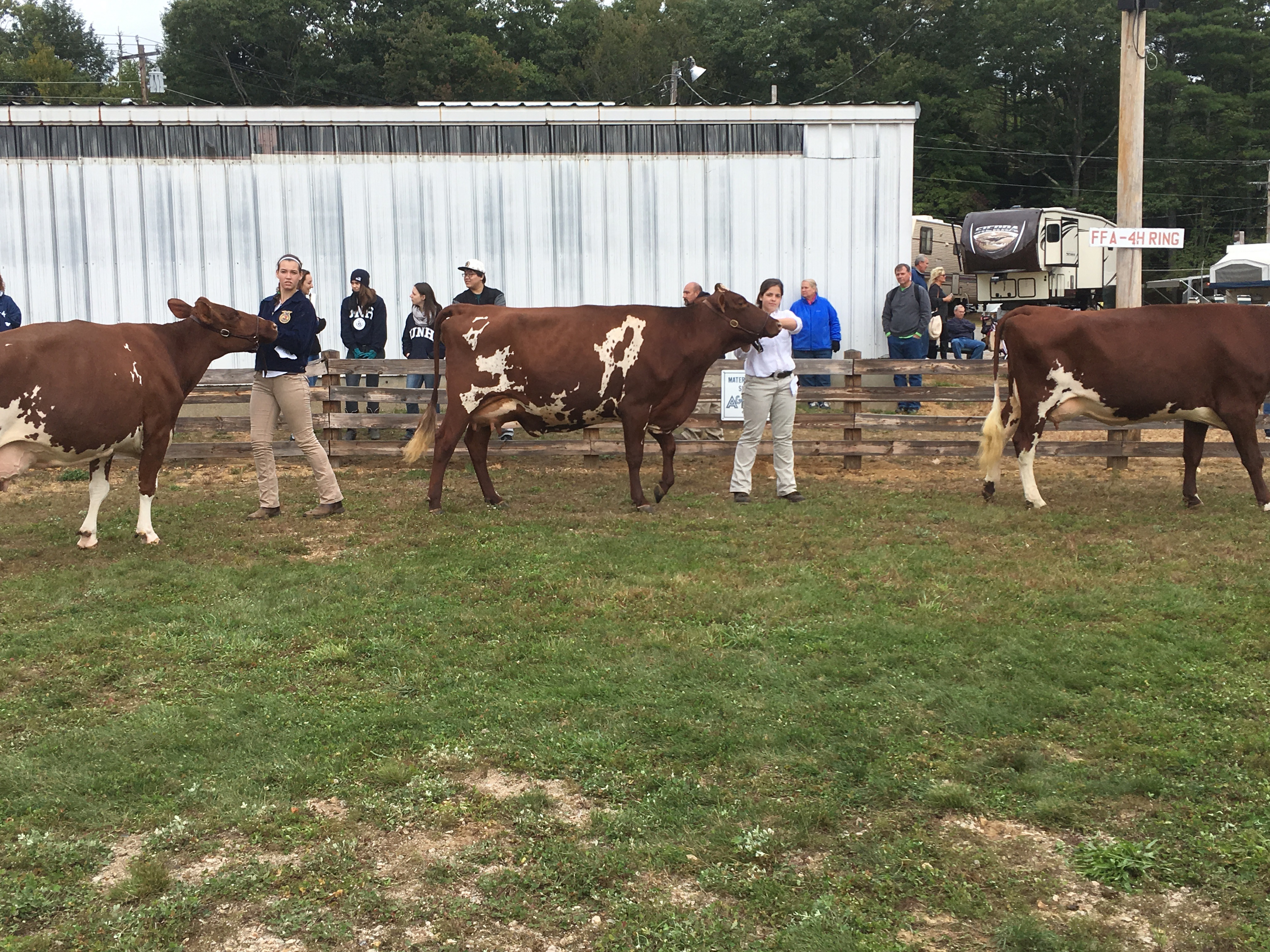 An annual event for many states is the dairy show and showmanship contest