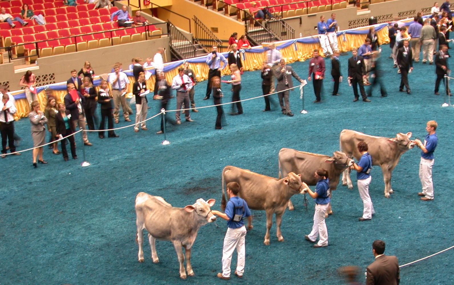 World Dairy Expo, Intercollegiate Dairy Cattle Judging