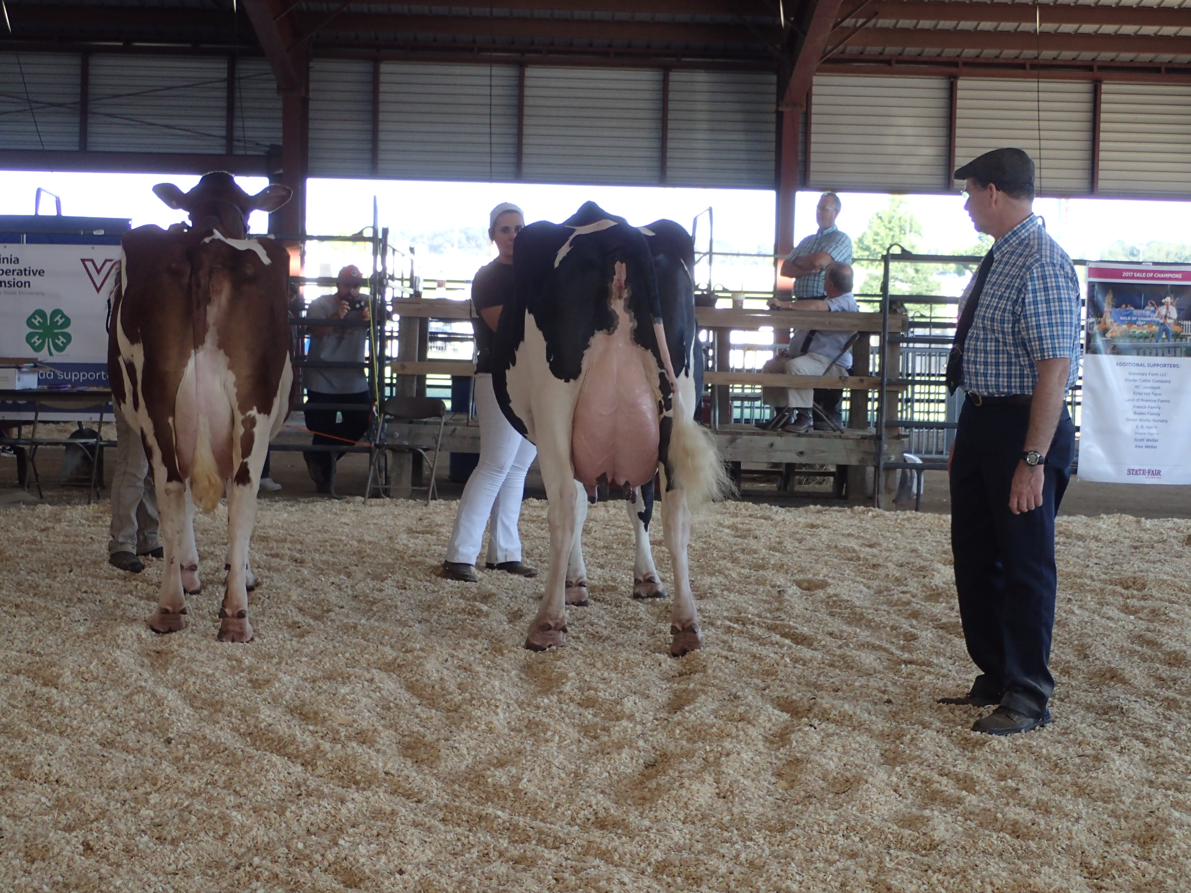 Udder height, in relation to the hock and rear Udder attachment are critical to evaluate