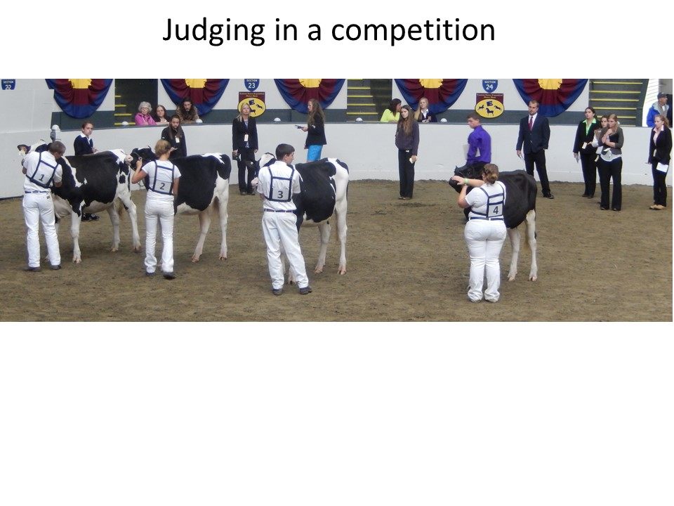 Dairy cattle judging is done in 4-H, FFA and collegiate teams around the USA