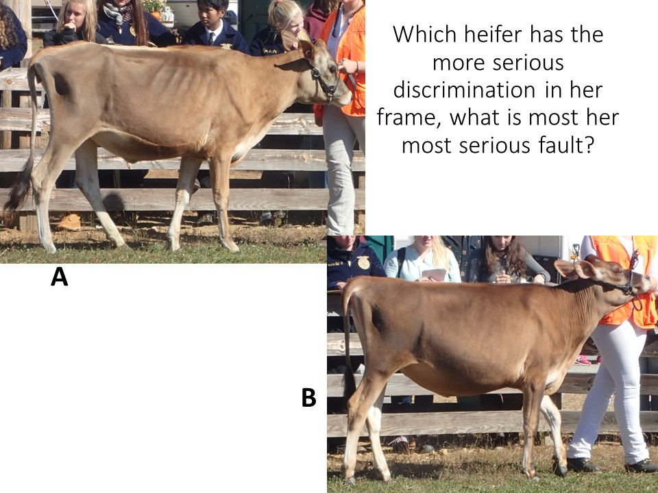 Looking at the categories of frame, including the topline, rump and blending of parts, you should be able to determine differences in quality between these two animals.