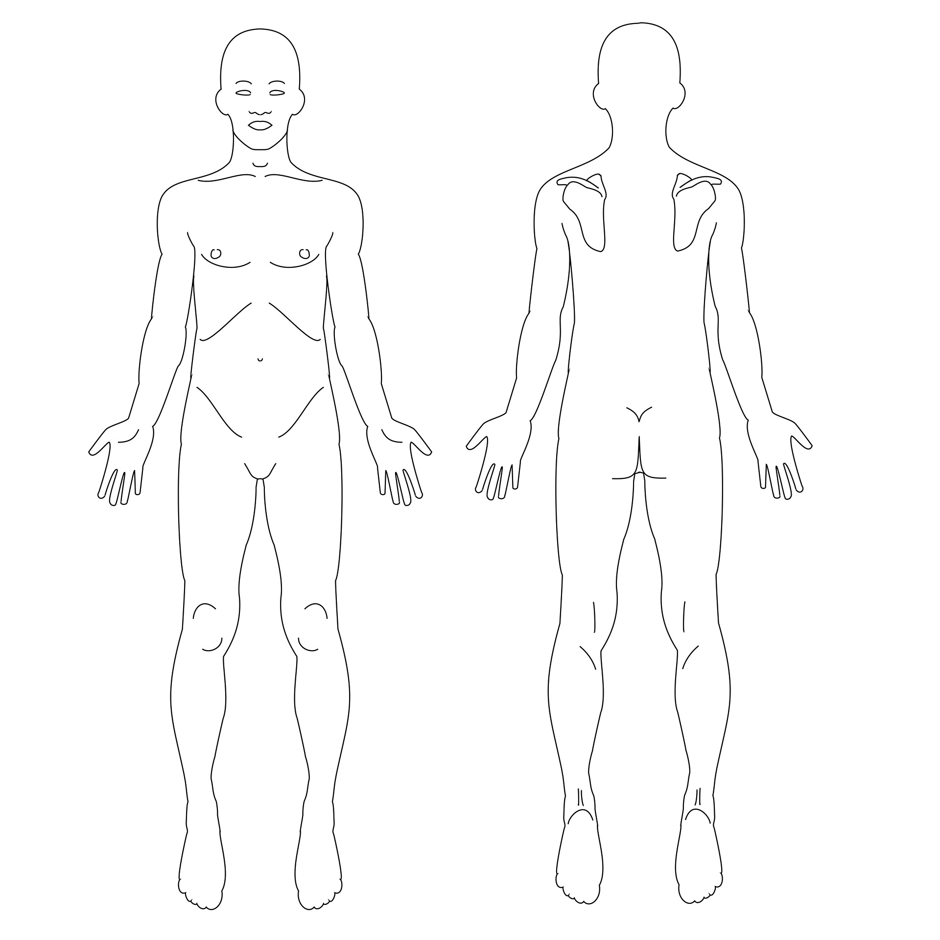 Licensed under CC0 https://www.maxpixel.net/Male-Fig-Anatomy-Human-Body-Males-1859518
