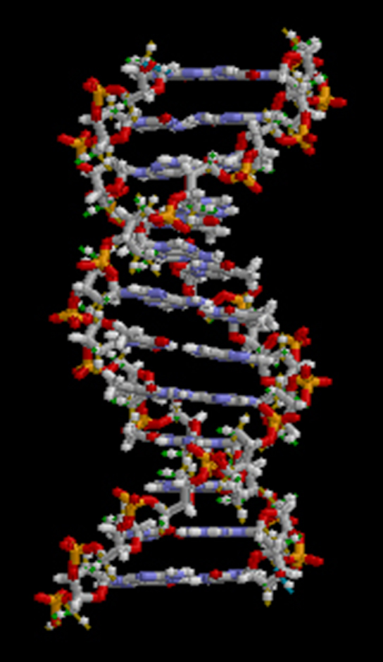 """Figure 1.15. All molecules, including this DNA molecule, are composed of atoms. (credit: """"brian0918""""/Wikimedia Commons)"""