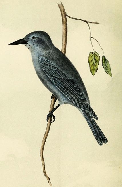 CC Photo by Biodiversity Heritage Library - http://flic.kr/p/aBeY3X