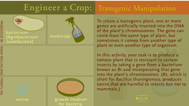 'Engineer a Crop' simulates the process of genetic modification. Click the link to the left to explore this resource.