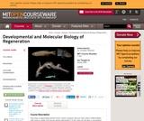 Developmental and Molecular Biology of Regeneration, Spring 2008