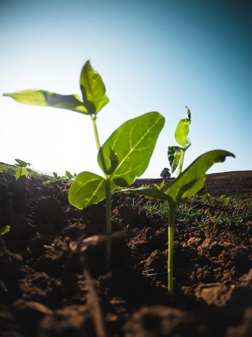 PEI SOLS 5th grade: Regenerative Agriculture