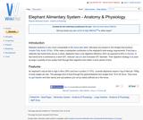Elephant Alimentary System - Anatomy & Physiology
