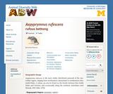 Aepyprymnus rufescens: Information