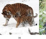 Biology, Biological Diversity, Vertebrates, Introduction