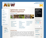 Agkistrodon contortrix: Information