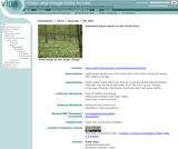 Abundant green plants on the forest floor