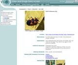 Adult milkweed bug