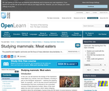 Studying Mammals: Meat Eaters
