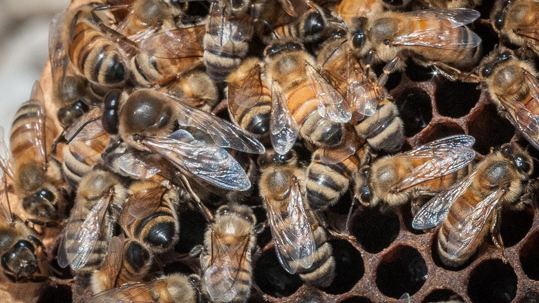 Be The Bee Virtual Field Trip and Educator's Guide