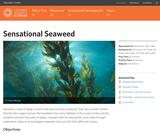 Sensational Seaweed