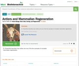 Antlers and Mammalian Regeneration