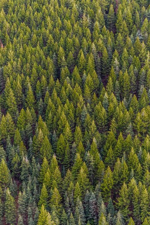 PEI SOLS HS Forests: Carbon Sequestration