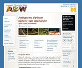 Ambystoma tigrinum: Information