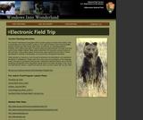 Bears of Yellowstone, Yellowstone Electronic Field Trip