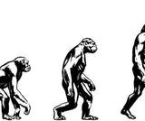Evolution Module
