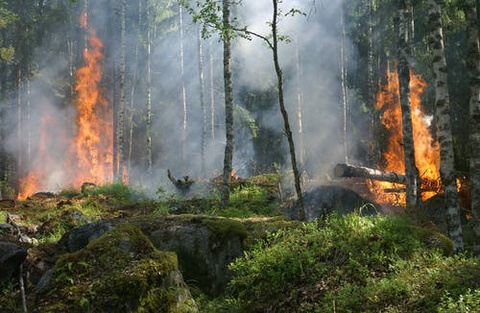 PEI SOLS 3rd Grade Fire: Wildfires in Washington
