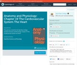 Anatomy and Physiology: Chapter 19 The Cardiovascular System The Heart