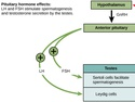 Hormonal Control of Human Reproduction
