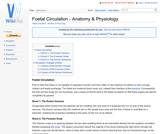 Foetal Circulation - Anatomy & Physiology
