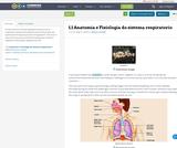 1.1 Anatomia e Fisiologia do sistema respiratorio