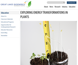 Exploring Energy Transformations in Plants