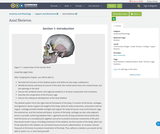 Anatomy and Physiology, Support and Movement, Axial Skeleton