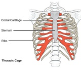 Biology, Animal Structure and Function, The Musculoskeletal System, Types of Skeletal Systems